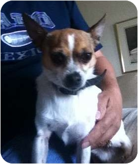 Chihuahua Dog for adoption in Columbus, Nebraska - Chase