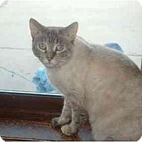 Adopt A Pet :: Chloe - Grand Rapids, MI