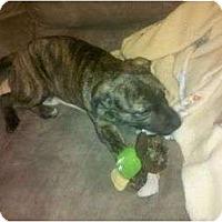 Adopt A Pet :: Hope - Claypool, IN