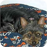 Adopt A Pet :: Jesse - Columbus, OH