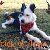 Adopt A Pet :: Punky Brewster - Princeton, KY