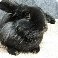 Adopt A Pet :: Dandylion - Newport, DE