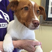 Adopt A Pet :: Rugby - Norwalk, CT