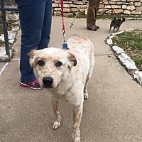 Adopt A Pet :: Duff - Clifton, TX