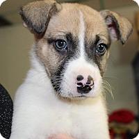 Adopt A Pet :: Jace - Millersville, MD