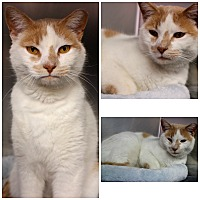 Adopt A Pet :: Scooper - Forked River, NJ