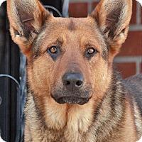 Adopt A Pet :: Mack von Kraichtal - Los Angeles, CA