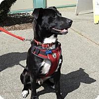 Adopt A Pet :: Sunny - Gig Harbor, WA