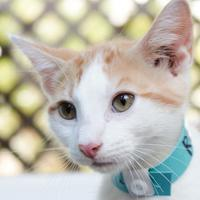 Adopt A Pet :: Rowdy - Hattiesburg, MS