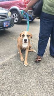 Terrier (Unknown Type, Small) Mix Dog for adoption in St. Thomas, Virgin Islands - FRANKEY