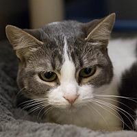 Adopt A Pet :: Pinky - Fargo, ND