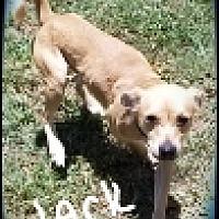 Adopt A Pet :: Jack - Palm Bay, FL