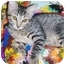 Photo 2 - Domestic Shorthair Kitten for adoption in Chandler, Arizona - Lil Man