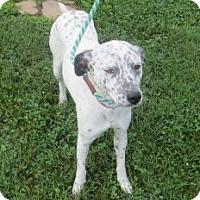 Adopt A Pet :: Lulu - PENDING, in ME - kennebunkport, ME