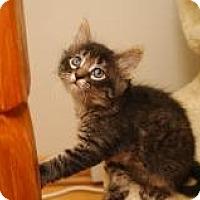 Adopt A Pet :: Kodiak - In Foster Care - Milwaukee, WI