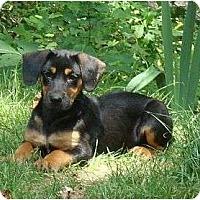 Adopt A Pet :: Quixote - Allentown, PA
