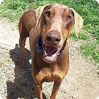Adopt A Pet :: Oskar - New Richmond, OH