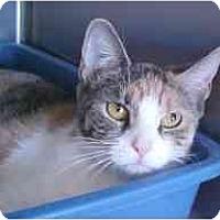 Adopt A Pet :: Kayla - Lunenburg, MA