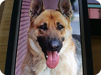 German Shepherd Dog Dog for adoption in Los Angeles, California - DANNY VON DOSSEL