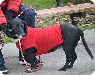 Dalmatian/Ibizan Hound Mix Dog for adoption in Green Cove Springs, Florida - Babs