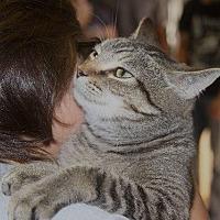 Domestic Shorthair Cat for adoption in New Bern, North Carolina - Betsy