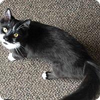 Adopt A Pet :: Razz - Norwich, NY