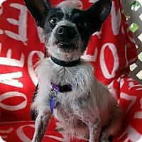 Adopt A Pet :: Akron - San Antonio, TX