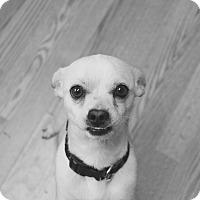 Adopt A Pet :: Kip - Los Angeles, CA