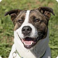 Adopt A Pet :: Raleigh - Durham, NC