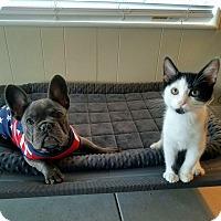 Adopt A Pet :: Moo - Rosamond, CA