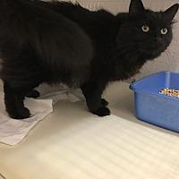 Adopt A Pet :: Willow - Douglas, WY