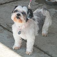 Adopt A Pet :: Heather - Lansing, MI