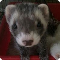 Adopt A Pet :: Madison - Libertyville, IL