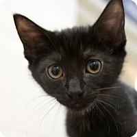 Adopt A Pet :: Kerry - Sarasota, FL