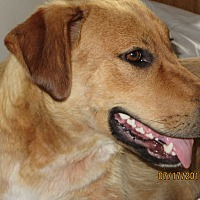 Adopt A Pet :: GOLDIE - Oakbank, MB