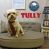 Adopt A Pet :: Tully - Arcadia, FL