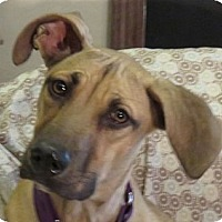 Adopt A Pet :: Lady Babs! Easy Going! - St Petersburg, FL