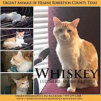 Adopt A Pet :: Whiskey - Hearne, TX