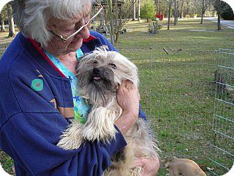 Tibetan Terrier Dog for adoption in Daleville, Alabama - Shaggy