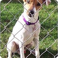 Adopt A Pet :: JJ - Phoenix, AZ