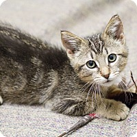 Adopt A Pet :: Chip - Chicago, IL