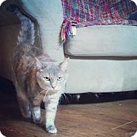 Adopt A Pet :: Ginger - Raleigh, NC
