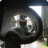 Adopt A Pet :: Marissa - Hamilton, ON