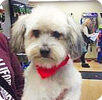 Terrier (Unknown Type, Small) Mix Dog for adoption in Spokane, Washington - Peewee