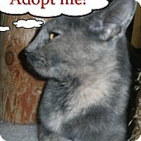 Adopt A Pet :: Cairo - Milwaukee, WI