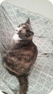 Calico Cat for adoption in Cedar Springs, Michigan - Izzma