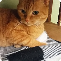 Adopt A Pet :: Rosedale - Medina, OH