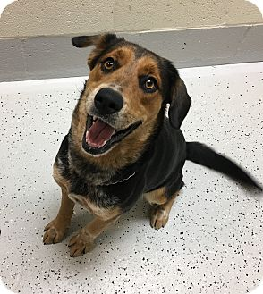 Collie/Hound (Unknown Type) Mix Dog for adoption in Burgaw, North Carolina - Penny