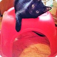 Adopt A Pet :: LUNA - Northfield, OH
