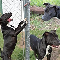 Adopt A Pet :: 29243 - Midwest City, OK